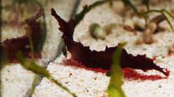 Pflanzen im Aquarium Seewasser