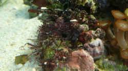 Aquarium Seewasser