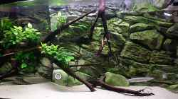 Aquarium Predatory characins (aufgelöst)