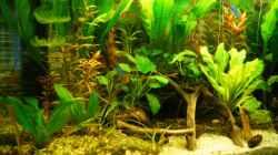 Aquarium Nur noch Beispiel