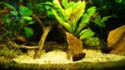Besatz im Aquarium Nur noch Beispiel