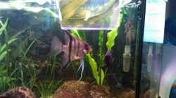 4Antennenwelse, 1 Fadenfisch,4 Skalare
