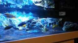 Besatz im Aquarium Becken 22990 STEHT ZUM VERKAUF !!!
