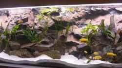 die ersten Fische sind eingezogen