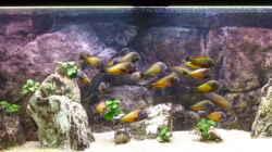 Aquarium Becken 23040 aufgelöst 2019