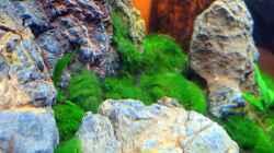 Aquarium Auf dem blauen Berge leben wir;)