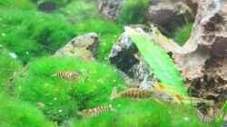 Besatz im Aquarium Auf dem blauen Berge leben wir;)