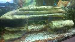 Dekoration im Aquarium Juwel Rio 240
