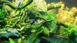 Aquarium The green culture