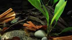 Besatz im Aquarium Afrikas Kongo River
