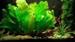 Aquarium Salmler-Suppe (Okt.2015 abegaut)