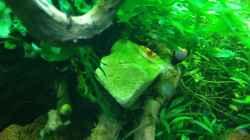 Besatz im Aquarium Cube 60