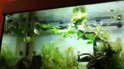 Pflanzen im Aquarium Fantasy Forest