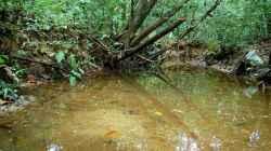 Hier mal ein Foto eines natürlichen Habitats der Keilfleckbärblinge in der Nähe