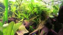 Aquarium Rio Jaños (aufgelöst)
