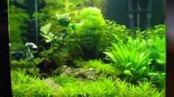 Aquarium Nano Cube 60 Liter