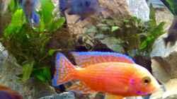 Firefish tagsüber