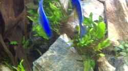 Besatz im Aquarium Steinbruch (nur noch als Beispiel)