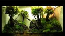 Aquarium 'Mossy Forest' Paludarium