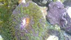Besatz im Aquarium Westerwälder Nanoriff