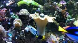 Pflanzen im Aquarium Meerwasserbecken deluxe
