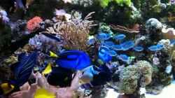 Besatz im Aquarium Meerwasserbecken deluxe