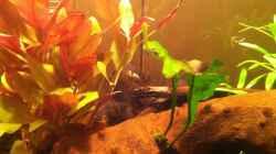 Aquarium A place for Tais ---- Aufgelöst