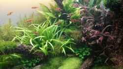 Aquarium Der Weg