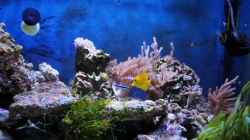 Besatz im Aquarium Micha's Great Reef Challenge