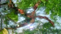 Aquarium Wirbellose I