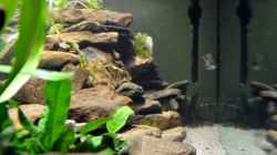 Besatz im Aquarium Tanganjika Becken