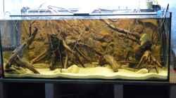 Aquarium Amazon Deadwood Nur noch als Beispiel