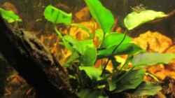 Aquarium Barschbecken