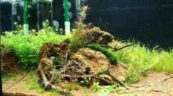 Dekoration im Aquarium Becken 25160
