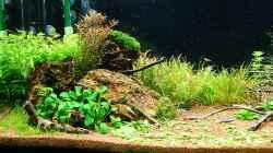 Pflanzen im Aquarium Becken 25160