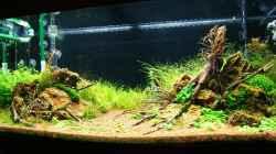Aquarium Becken 25160