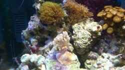 Aquarium Salzwasser Würfel