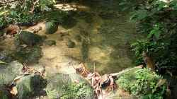 Vor Ort --> Habitat Thailand - Urwaldbach