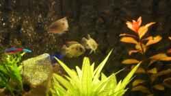 Besatz im Aquarium Becken 25271