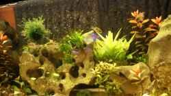Pflanzen im Aquarium Becken 25271