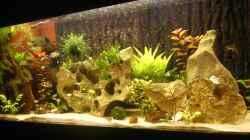 Aquarium Becken 25271