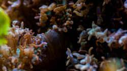 Besatz im Aquarium MW Würfel WZ
