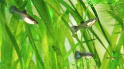 Besatz im Aquarium Becken 25327