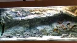 Aquarium Tropheus Ilangi Becken