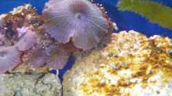 Pflanzen im Aquarium Becken 2550