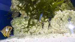 Besatz im Aquarium Becken 2550