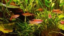 Aquarium Becken 2564