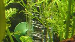 Technik im Aquarium Becken 2564