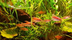 Besatz im Aquarium Becken 2564