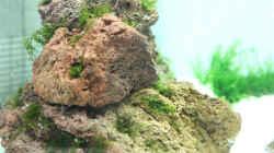 Pflanzen im Aquarium The Beach